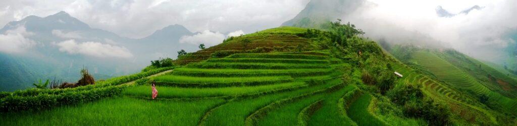 rice terrace on mountain in Vietnam